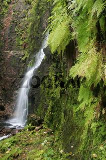 Nord-Schwarzwald, Bad Rippoldsau, Burgbachwasserfall, Deutschland, Germany