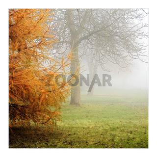 Herbst_Nebel