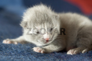 Katzenbaby, newborn, kitten, catbaby, blind, blindes, neugeboren, neugeborenes, catbaby, cat-baby, 4 days old