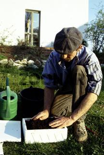 Champignons (Agaricus) kultivieren