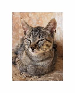 Katze_auf_Kreta