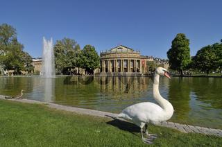 Schwan vor Staatstheater (Großes Haus) Stuttgart