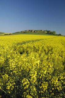 rapsfelder vorm goldberg, ostalbkreis, baden-wuerttemberg, deutschland, rape fields in front of goldberg, germany