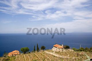 Weingut auf Elba