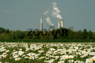 Industrie + Blumen / Flowers & Industry