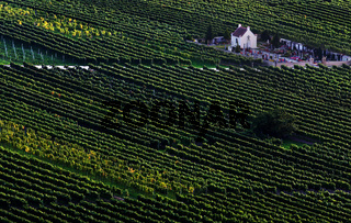Friedhof in Weinkultur