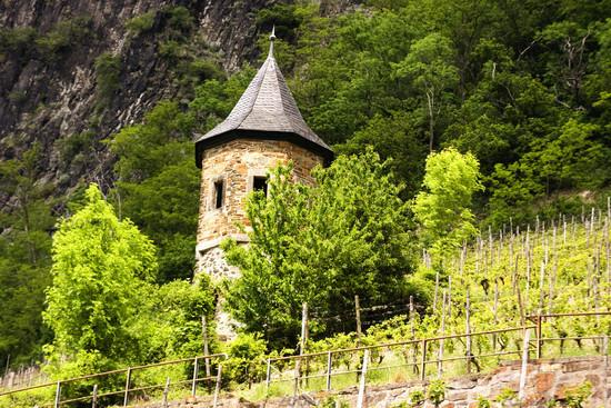 Vineyard on the Rhine