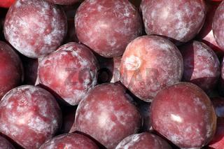 Plums | Pflaumen (Prunus)