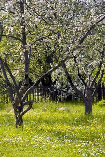 Gartenwelt im Frühling