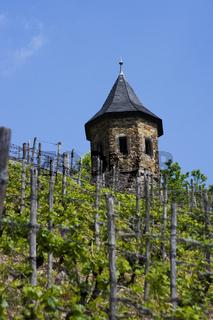 Weinberg am Rhein