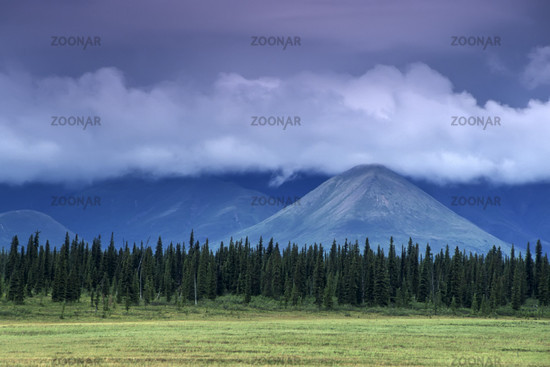 denali nationalpark and preserve, alaska interior, usa,