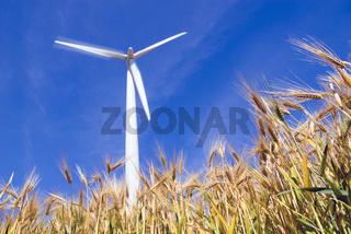 Windrad im Getreidefeld