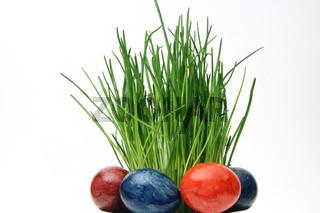 Osterdeko - easter grass