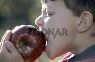 apfel, aepfel, apfelbaum, kulturapfel, malus, malus domestica, apples, crabapples, pommier,