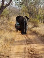 Elefant stoppt Auto
