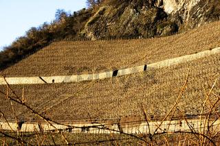 Weinterassen am Drachenfels
