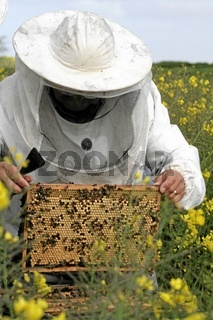 Imker, Bee-Keeper, Beekeeper