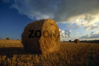 Feld in der Nähe von Morlaix Bretagne / Field near Morlaix Brittany