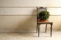 Stuhl mit Blumen panorama