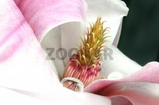 Zauberhafte Spiegeleien mit Magnolie