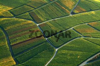 Weinberg,weinbaulandschaft,Reblandschaft,Weinbau,Luftaufnahmen