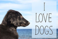 Dog At Ocean, Text I Love Dogs