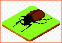 beetle vector eps