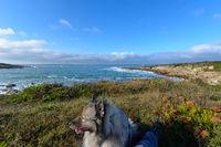hundeurlaub am Meer in der Bretange am Atlantik