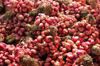 Closeup Of Large Stock Of Red Onion Bundle On The Market