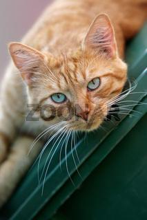 rote Katze auf Tonne