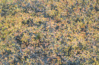 tapestry of shrubs in fall colors