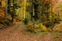 autumn forest, forest road,
