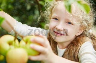 Mädchen mit Locken pflückt Äpfel