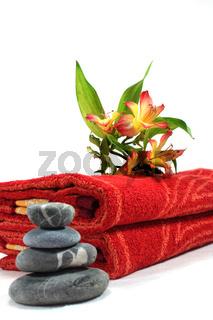 Wellness - Körperpflege