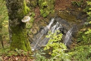 Gebirgsbach im Nationalpark Kalkalpen