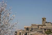 Spring in Orvieto