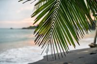 Branch of palm tree on beach