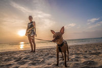 Woman with mini pinscher dog on the beach