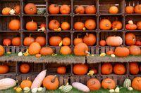 Decorative gourd or ornamental pumpkin