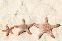 Three starfish on beach