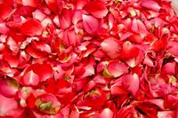 Red rose Leafs