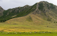 Typical landscape with grassland for yaks in the Gorkhi-Terelj National Park, Mongolia