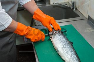 cutting salmon fish