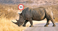 white rhinoceros at a traffic sign, South Africa