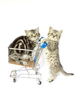Two kittens with shopping cart on white