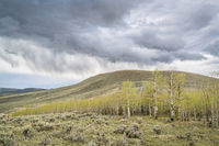 rain and storm clouds over aspen grove