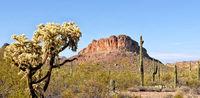Arizona Desert Landscape, Tonto National Forest