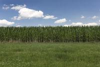 Sommerhimmel über Ackerland mit Maisfeld in Bayern