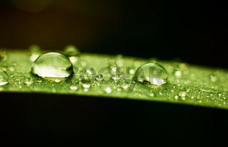 Rain drops on grass leaf at autumn season