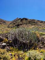 Landschaft auf der Kanarischen Insel Teneriffa